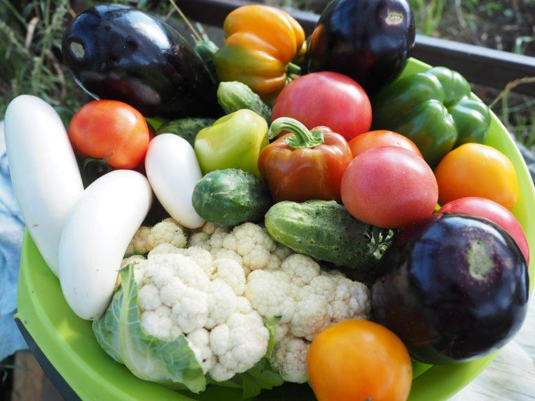 Źródło białka w diecie bezmięsnej