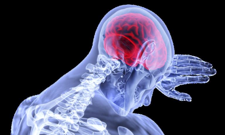 Co wiemy na temat mózgu?